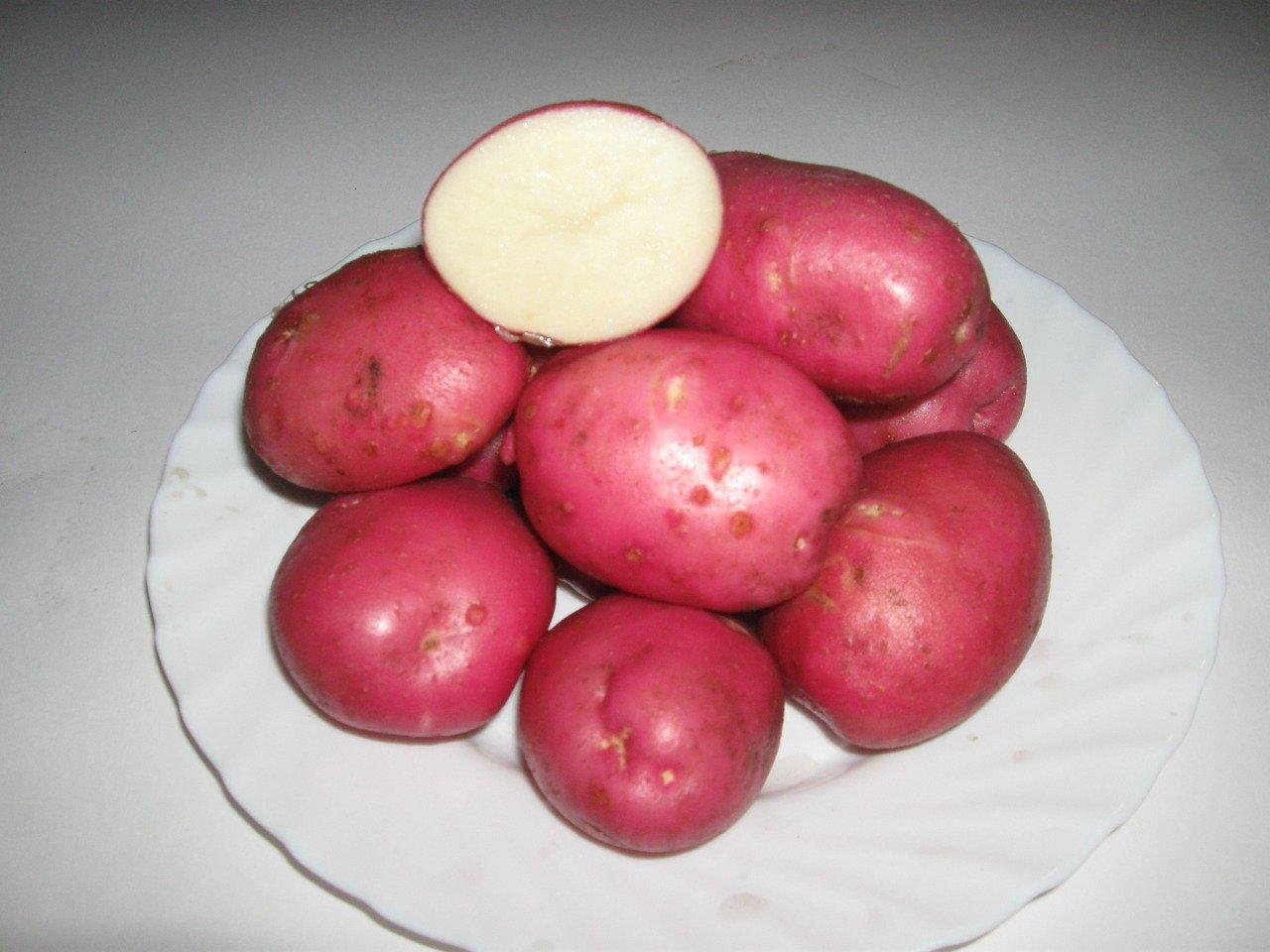 Картофель вишенка описание сорта фото отзывы