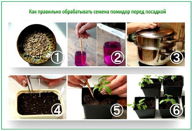 Как протравливать семена в домашних условиях